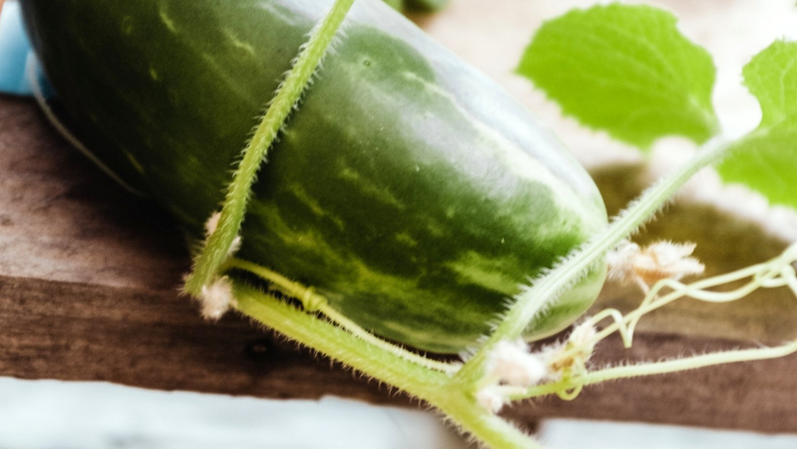 verduras de temporada en julio calabacín