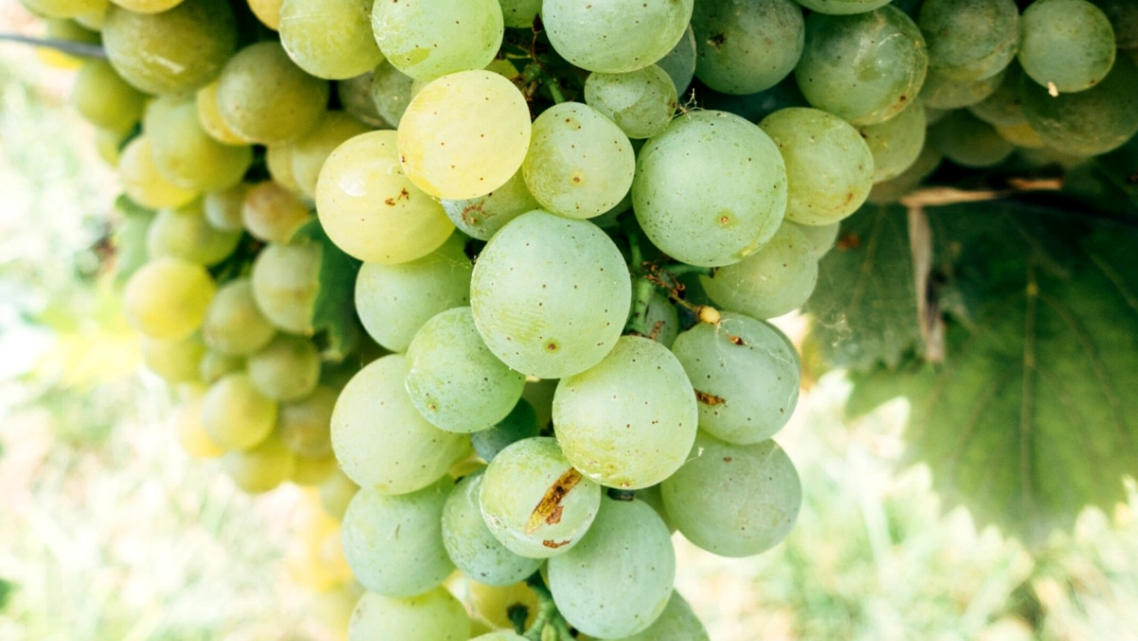frutas de temporada en septiembre en España